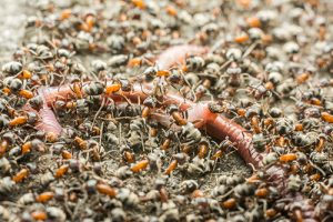 Ibis Projects/ Durban Pest Control Services | Ants + Termites