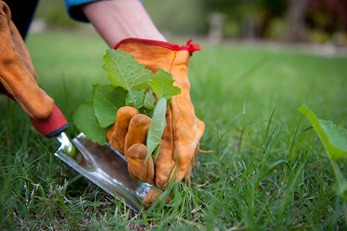 Ibis Projects/ Durban Pest Control Services | Weed Control + Soil Poising